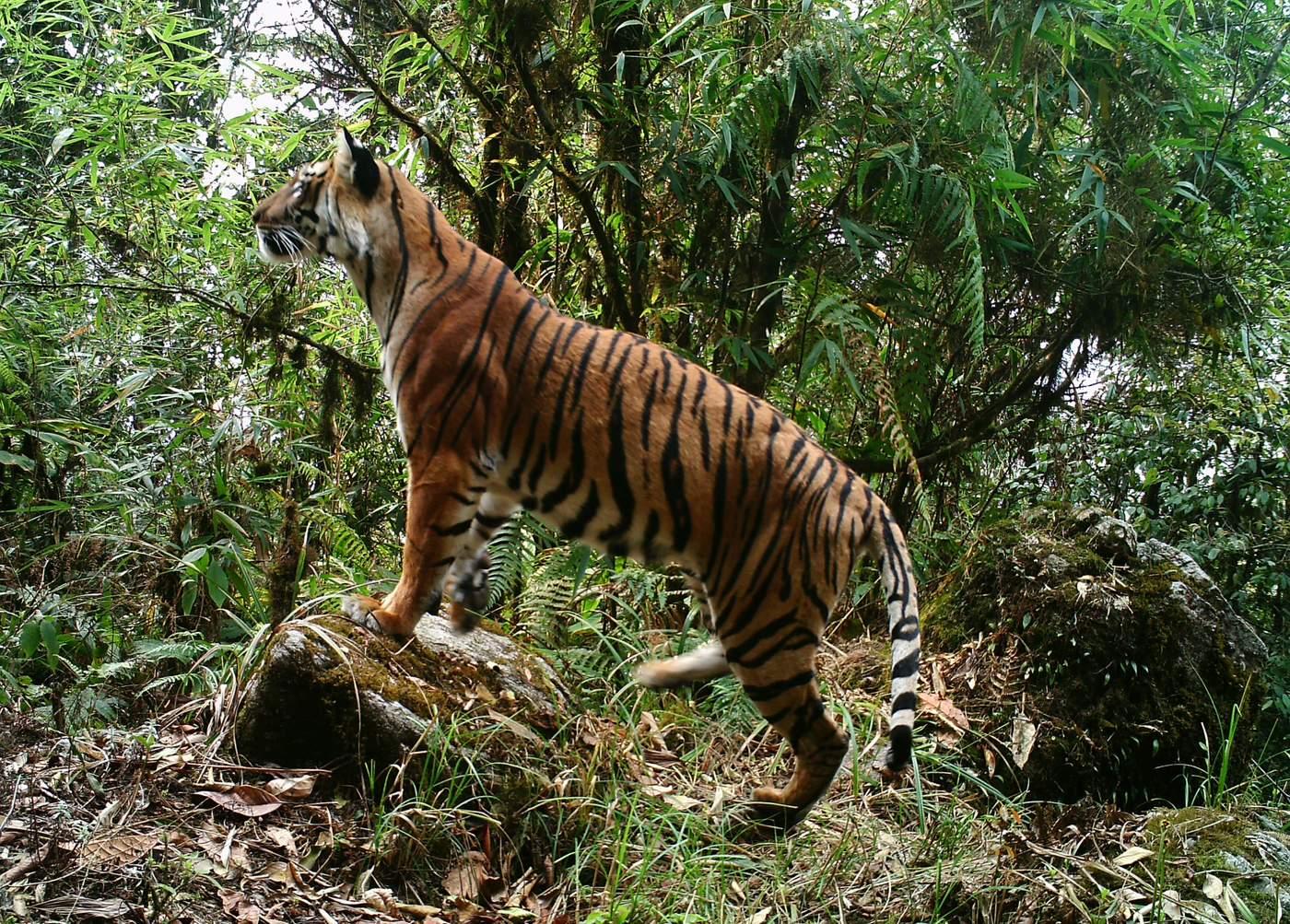 Nepali Tiger Altäre — foto 8