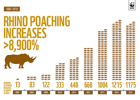 Rhino poaching infographic 2015