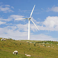Windturbine in  a field of sheep, Wales