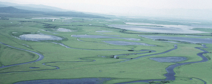 Floodplains of the Amur river.