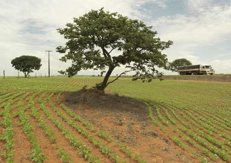 Natural Cerrado vegetation surrounded by soya monoculture that has invaded the region.  Peter Caton / WWF