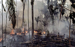 Burning the Amazonian rainforest