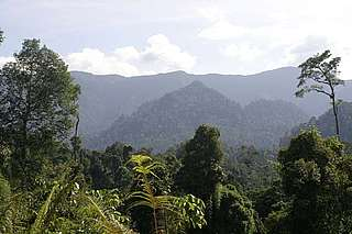 Dense forest landscape of the northeast tip of Borneo.