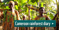 Cameroon rainforest diary