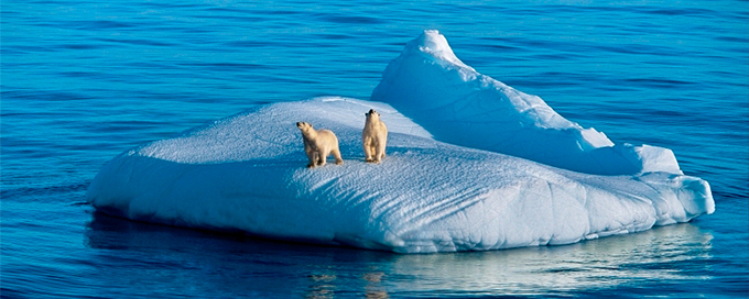 Polar bears on iceberg