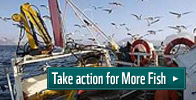 More fish petition cfp campaign 2011 take action