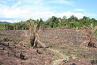 Deforestation Kelawik, West Kalimantan, Borneo