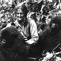 Dian Fossey with mountain gorillas