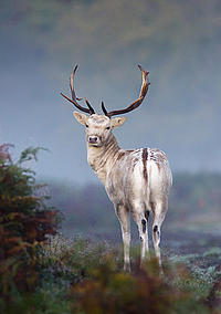 BWPA 2011 Portrait category winner