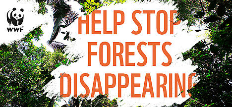 Help stop forests disappearing