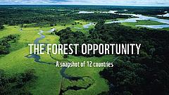The forest opportunity