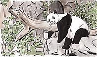 fundraisers drawing of a panda 2