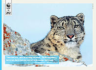 Learn Autumn 2012 snow leopards