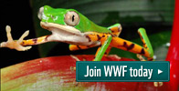Join WWF today