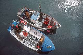 Mackerel boat returning with MSC certified catch of handline caught mackerel, Newlyn, Cornwall.  United Kingdom