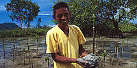 A worker for the Mangrove Conservation programme. Talisei, northern Sulawesi, Indonesia