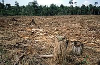 Illegal logging Indonesia