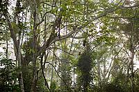 Forest in Cameroon