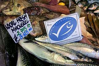 MSC-certified sustainable fish