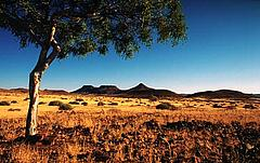 Sparsely wooded grassy plain with mountains in the background Kunene Province, Damaraland, Namibia