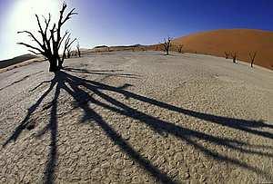 © Martin HARVEY / WWF-Canon