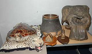 Illegal wildlife trade haul, Essex