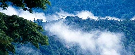 The tropical forests of Borneo