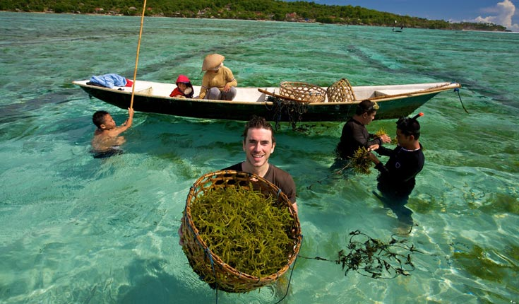 Simon Reeve in Indonesia, helping to harvest seaweed, a future food and a future fuel.  © Craig Hastings