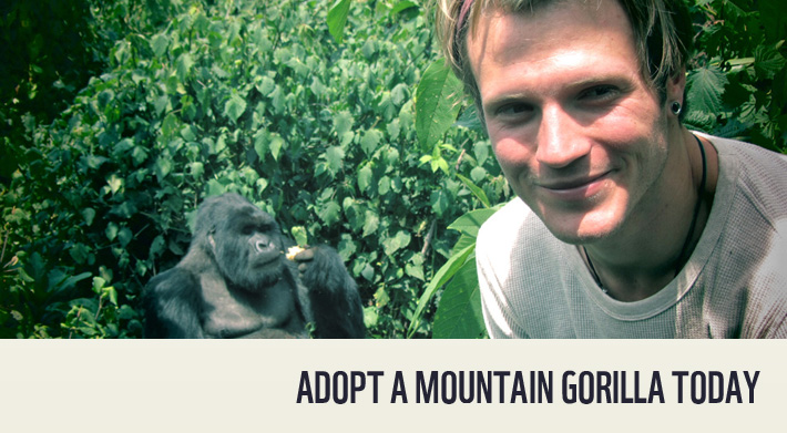 Adopt a baby gorilla with Dougie Poynter