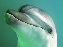 Adopt a dolphin