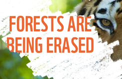 Forests are being erased