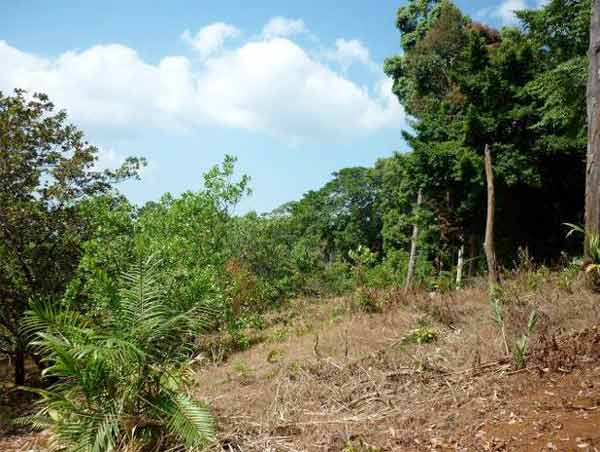 Illegal conversion of forest to agricultural land © WWF-Greater Mekong