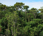 Tree tops in the Amazonas- © WWF-US / Ricardo LisboaF