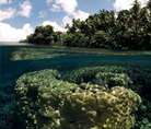 Coral reef seen underwater from above - © Jürgen Freund / WWF-Canon