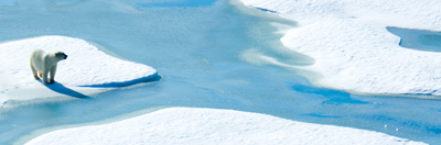 Polar bear standing on ice floe