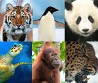 © Michel Gunther / WWF-Canon - Giant panda