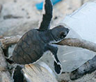 Help us save marine turtles