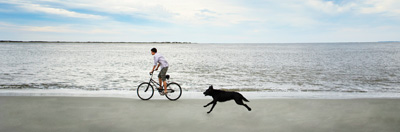 Man and dog running on beach