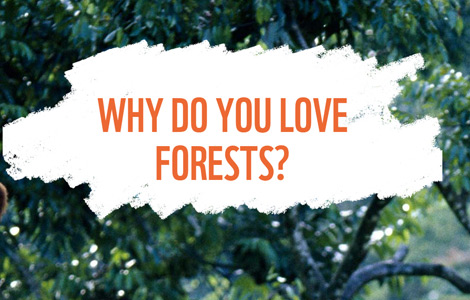 why do you love forests