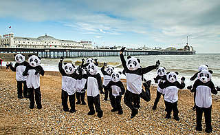Panda flashmob, Brighton beach
