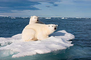 Two polar bears on a piece of ice in the Artic Ocean