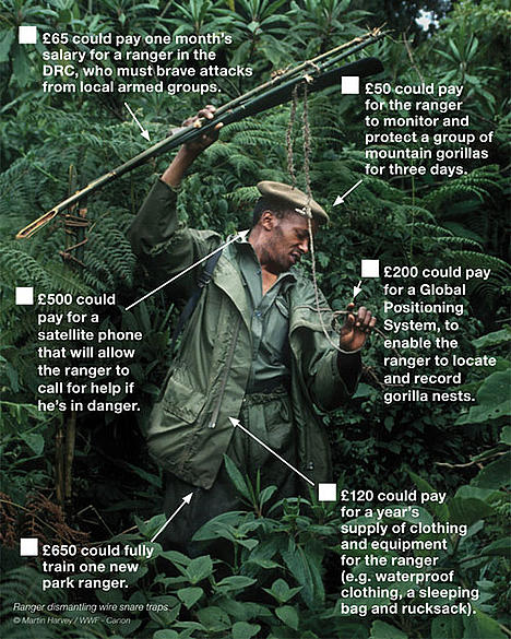 Mountain gorilla appeal - ranger shopping list