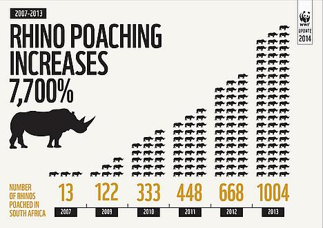 A Rhino infographic describing the number of Rhinos that have been poached since 2007. The percentage increase is 7,700 percent.