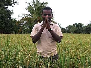 Rice farmer using improved farming practices (SRI)