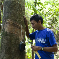 A rubber tapper leans against a rubber tree in Acre, Brazil.