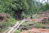 Small scale illegal logging, West Kalimantan, Borneo