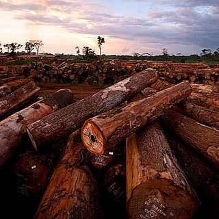 Logs at FSC certified Pallisco logging company, East province, Cameroon