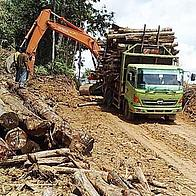 Truck loaded with illegal timber