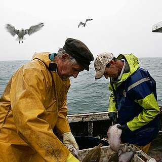 A pair of fishermen sort through their catch off the coast of Hastings, East Sussex