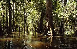 Varzea Flooded Forest, is a breeding ground for more than 200 fish species